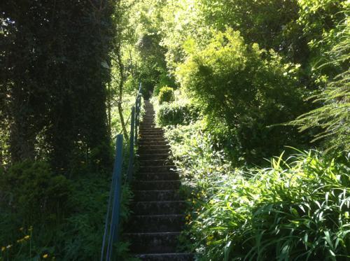 緑豊かな道